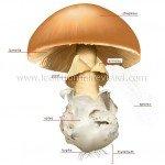 structure-un-champignon-83530-150x150