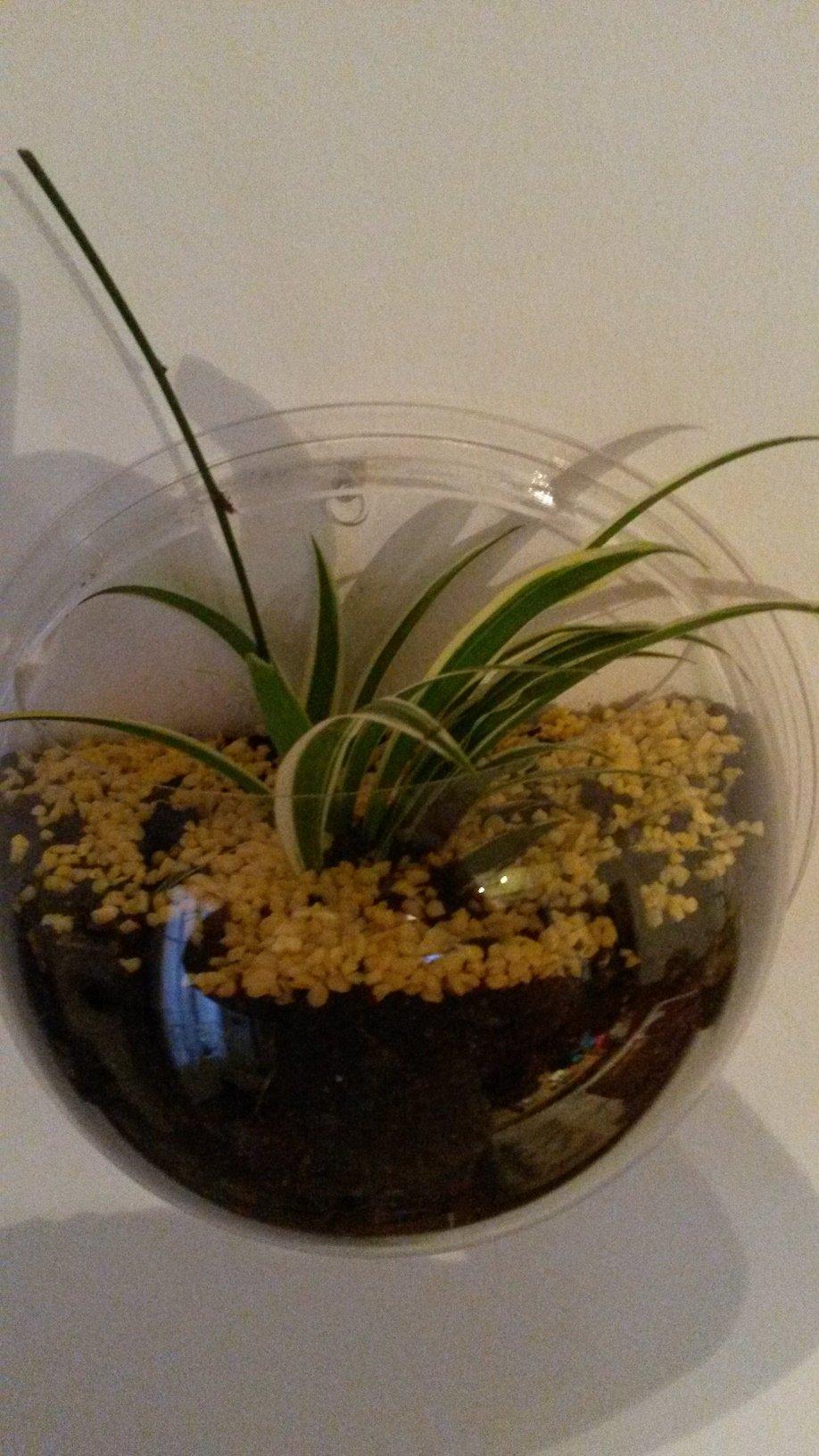 Commande de vases suspendus en verre n 1 gaali 39 s passions for Plante plastique gifi